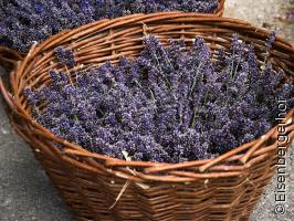 Aromatherapie Vorstellabend