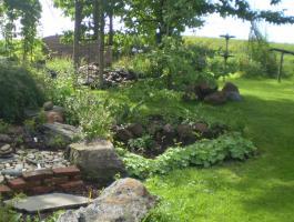 Kräuter und Heilpflanzen im Garten