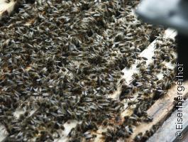 Vortrag Das Herz und die Bienen