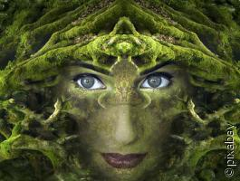 Naturgeister - Schamanische Begegnung zu