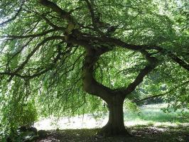 Schamanische Baum-Begegnungen