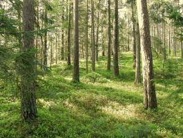 Die Heilkräfte des Waldes